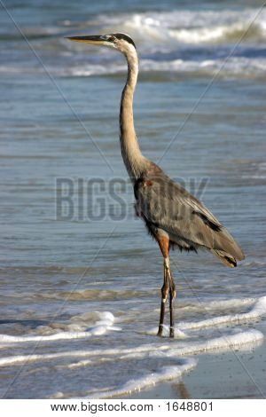 Heron On The Beach