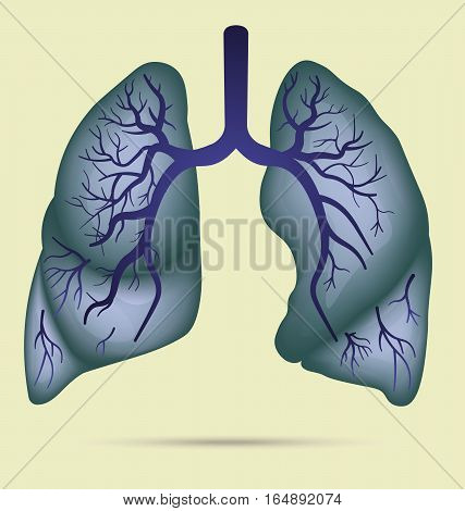 Human lungs anatomy for asthma, tuberculosis, pneumonia. Lung cancer diagram in detail illustration. Breathing or respiratory system. Vector