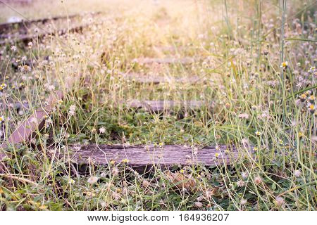 Old railroad tracks with grass and sunshine.