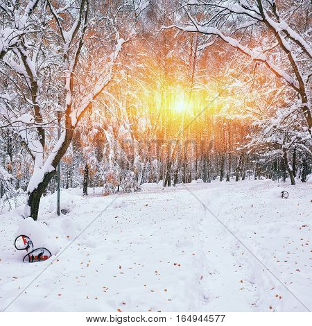 Snow-covered trees in the city park. Lots of snow at sunset. Fallen leaves