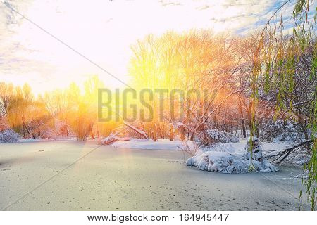 Scenic view of the frozen pond with willow tree and first snow. Fallen Leaves on the Snow