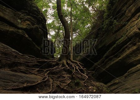 The tree's roots sprawl across the ground looking for something to cling to.