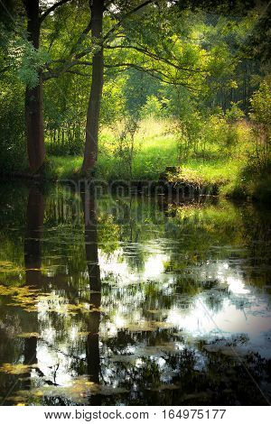 Summer pond in forest with trees and reflection