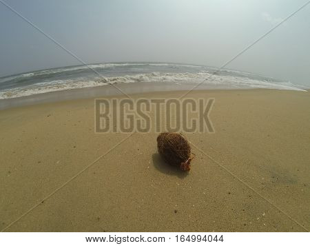 Coconut on the shore of the Indian ocean.