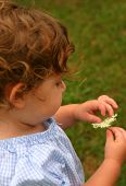 stock photo of niece  - my niece picking wildflowers in the field - JPG