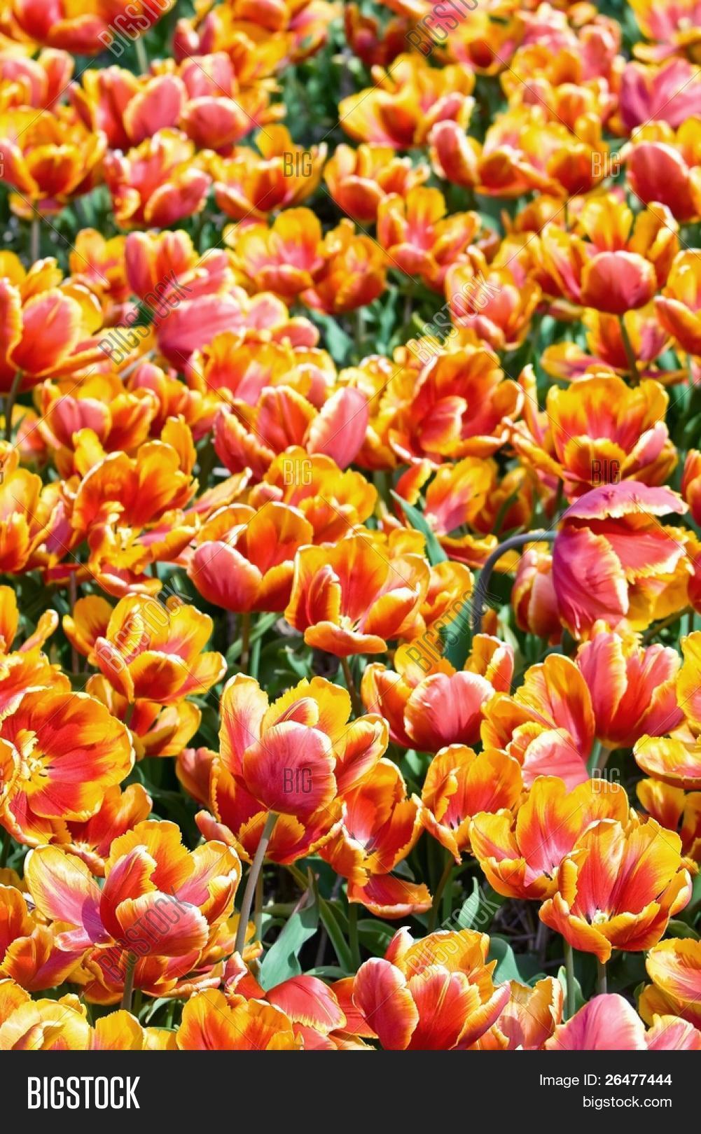 Viento juego hierro pintada Flor Mariposa gris jardín primavera estilo casa de campo