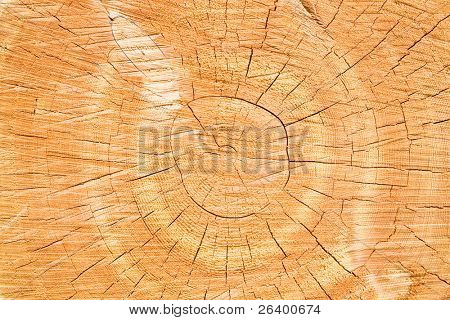 tree stump background - cross section closeup of large tree. only slight levels adjustment, unsharpened.