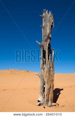 tree in the desert - coral pink sand dunes, utah
