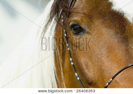 schönen Pferde 74. sehen Sie mehr in meinem portfolio