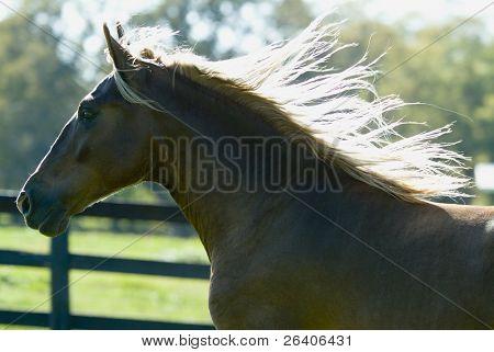 Beautiful Horses 94. See more in my portfolio