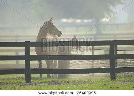Bebé y yegua caballo equinos