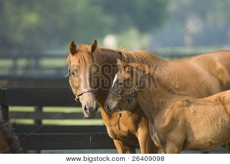 Baby and Mare Horse Equine series 12