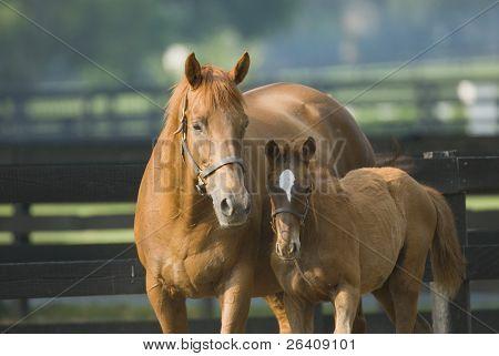 Bebé y yegua caballo equino serie 41
