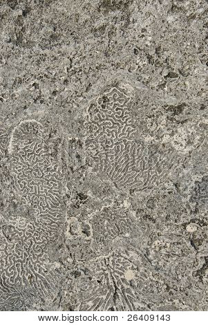 Sea coral background fossil ocean texture -- series 04