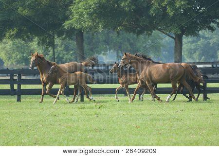 Bebé caballo y yegua equina--serie 14