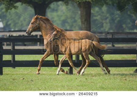 Bebé caballo y yegua equina--serie 17