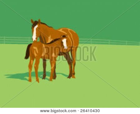 Mare and foal mother baby equine horse standing together green pasture - Vector Illustration