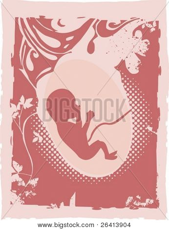 fetus  vector illustration