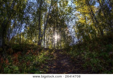 Path To The Sun Through The Autumn Forest