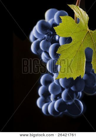 vines grapes