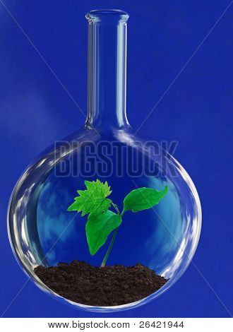 green sprout in glass retort