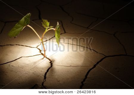 sprout in arid land