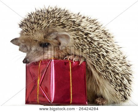 Igel und Geschenk