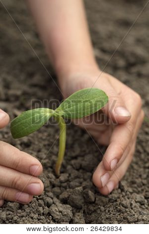 sprout in child hand