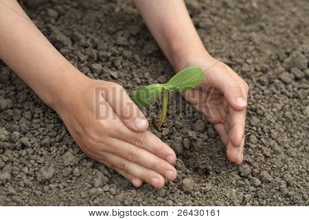 green sprout  in child hand