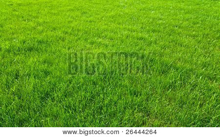 new spring green grass for design