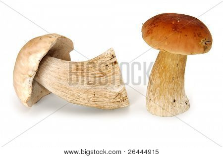 Two eatable mushrooms isolated on white
