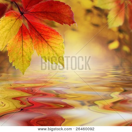 Autumn leaves above the water as a backdrop