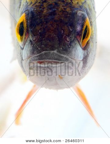 Interesting picture of a tropical reef fish close up.