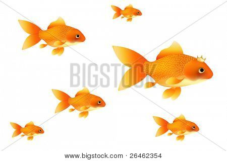 Background With Golden Fishes, Isolated On White