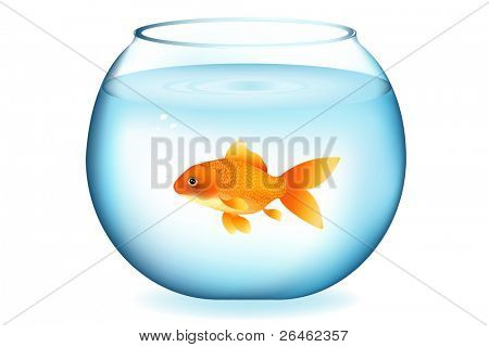 Golden Fish In Aquarium, Isolated On White