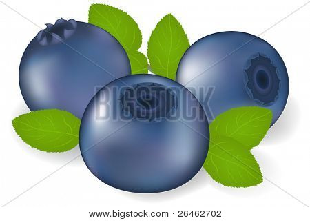 Bilberry With Leaves, Isolated On White