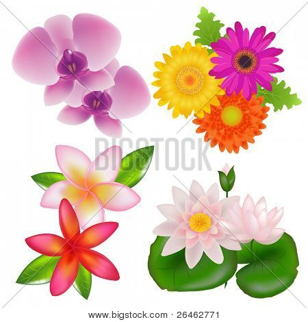 Set Of Flowers (Orchid, Frangipani, Lotus, Gerber) With Leaves, Isolated On White