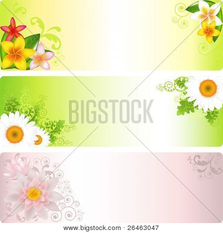 3 Flower Banners With Lotus, Chamomiles And Frangiapani