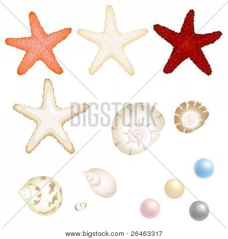 Sea Set From Starfishes, Cockleshells And Pearls, Isolated On White