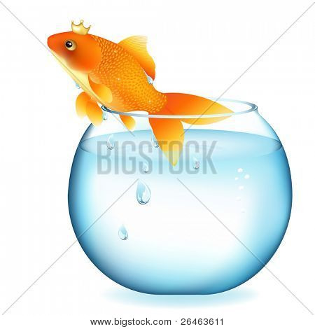 Dreaming Goldfish In Aquarium, Isolated On White