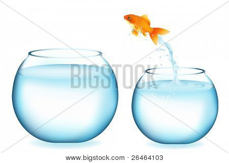 Golden Fish Jumping To Other Aquarium, Isolated On White