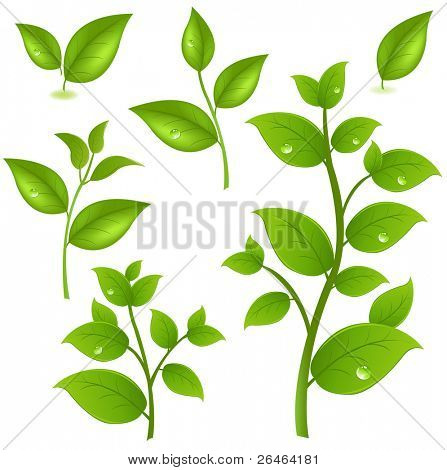 Collection Of Green Branches, Isolated On White Background, Vector Illustration