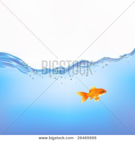 Goldfish Swimming In Water