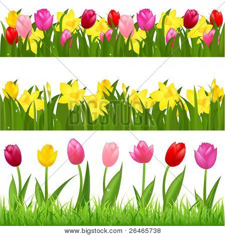 3 Flower Borders From Tulips And Narcissuses, Isolated On White Background