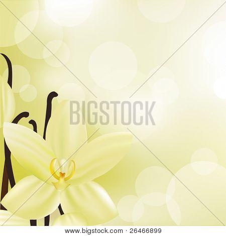 Vanilla Flower, Vector Illustration