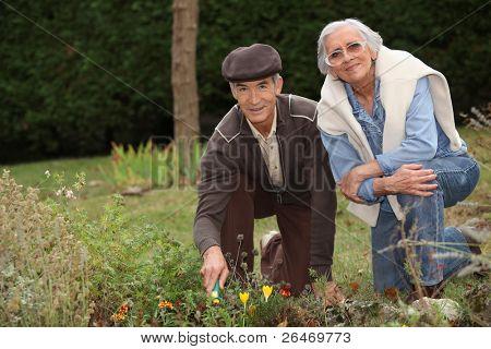 a mature couple gardening