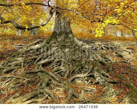 life-giving  roots I.