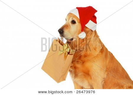 My dog   - â?? Golden retriever â?? like dog -santa claus , which bears presents on white background