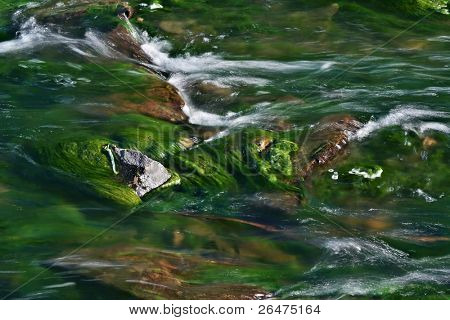 A photo of a water torrent in the river full green of algae
