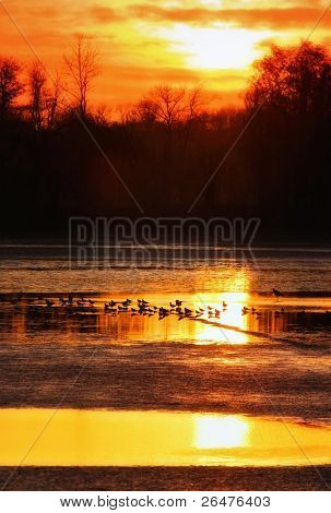 Water - birds on the pond at sunset